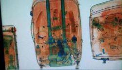 290x167_droga-foi-localizada-pela-policia-federal-quando-as-malas-passavam-pelo-raiox-do-aeroporto_1647388