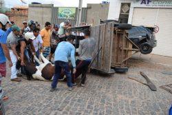 acidente-cavalo-raca-brumado-noticias-43